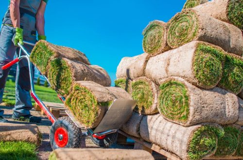 Professional Landscaper Installing Natural Grass Turfs in the Garden.